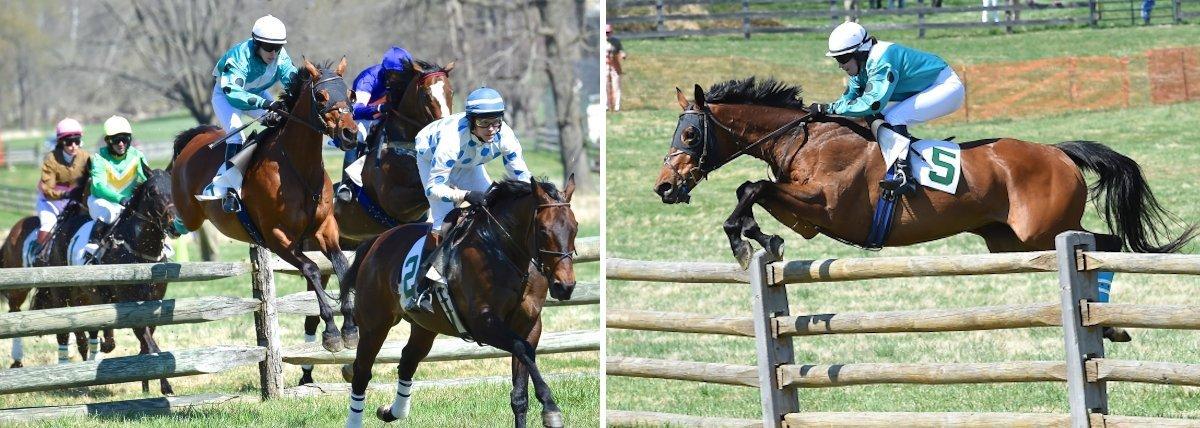 2015winninghorse